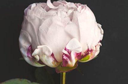 Choosing Funeral Flowers